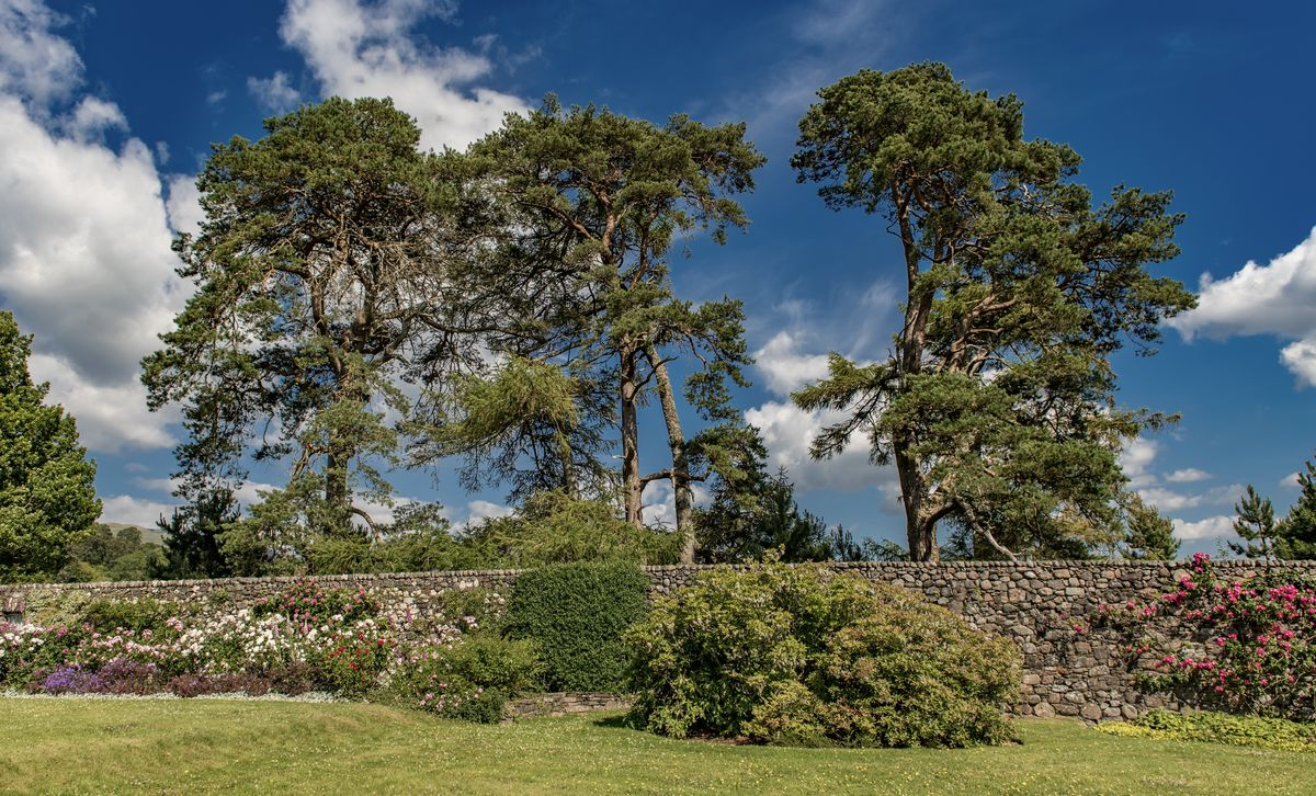 Three trees at Ardchattan Priory