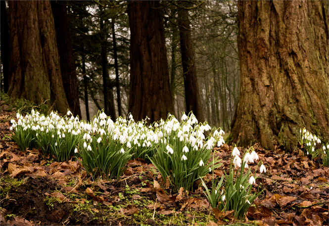 Snowdrops and Winter Walks