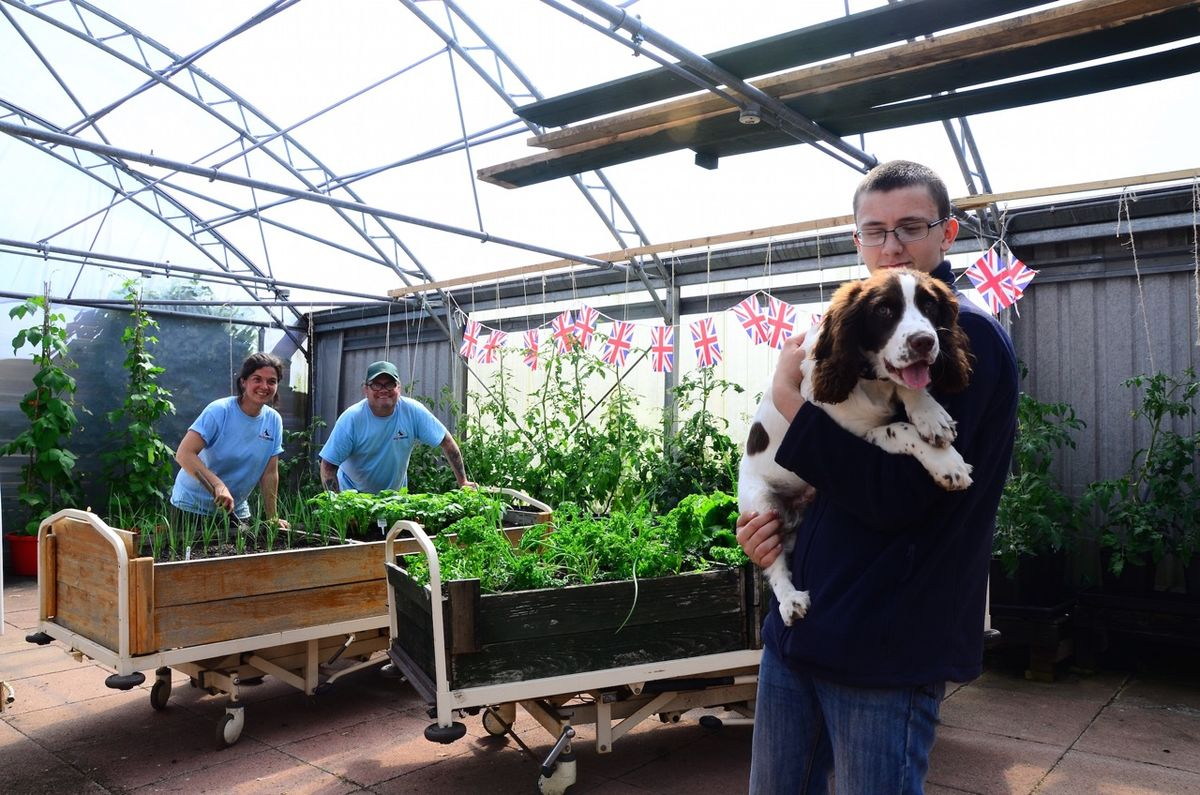 Volunteers and Veterans work together at Bravehound-Erskine Hospital, overseen by Finn the Bravehound puppy in training.
