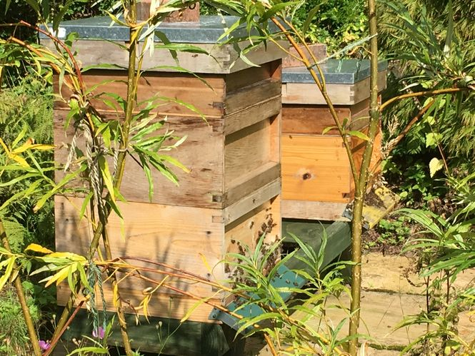 Beehives at Hollytree Lodge