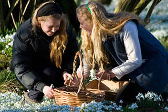 Girls picking snowdrops at Lawton House, Angus and Dundee