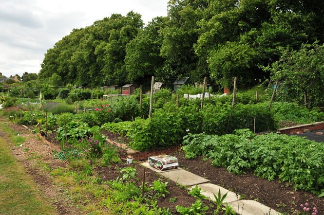 Musselburgh Allotments