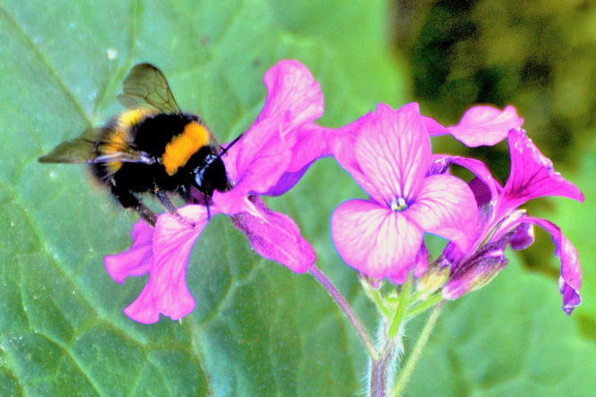 Six bee-neficial things you can do for bees in your garden!