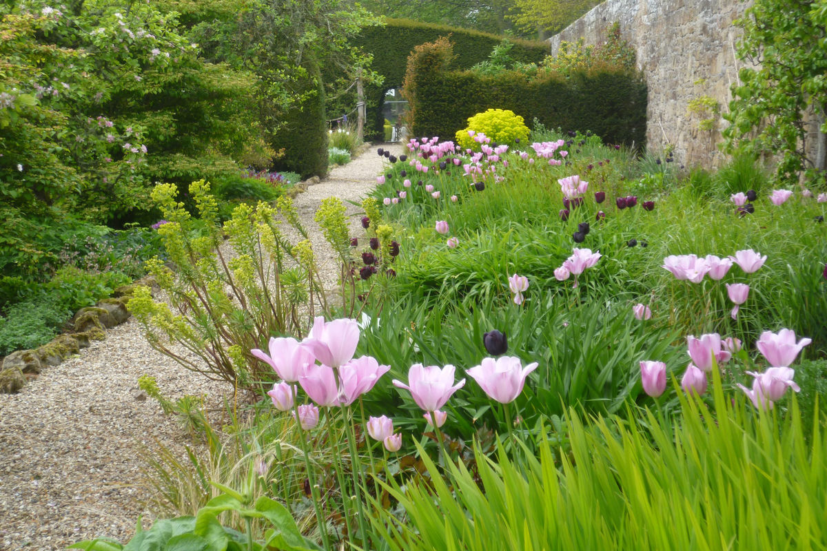 Tulip bed at Wormistoune House, Fife