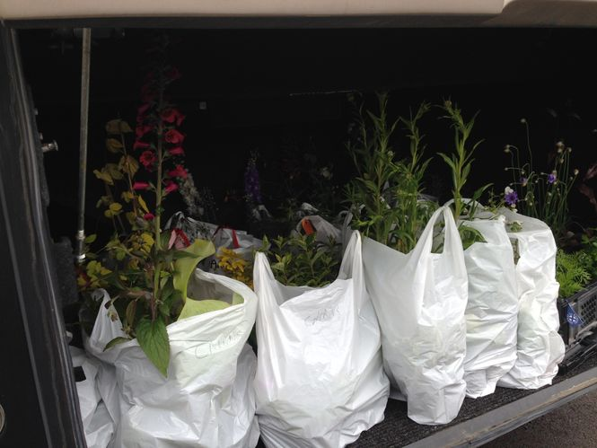 A trunk load of plants