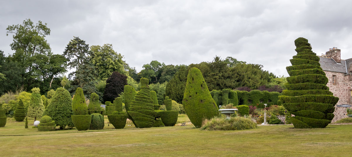 Fingask Castle Topiary
