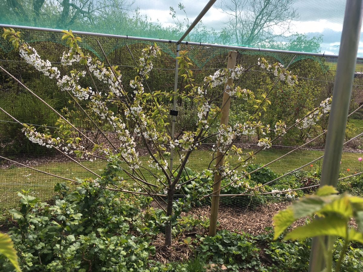 Strathkinness Community Garden and Orchard