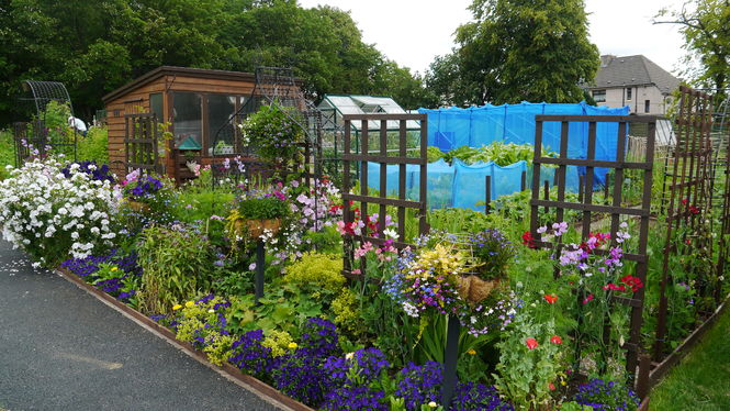 Viewpark Allotments and Gardens