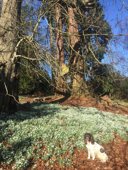 Fingask Castle with snowdrops