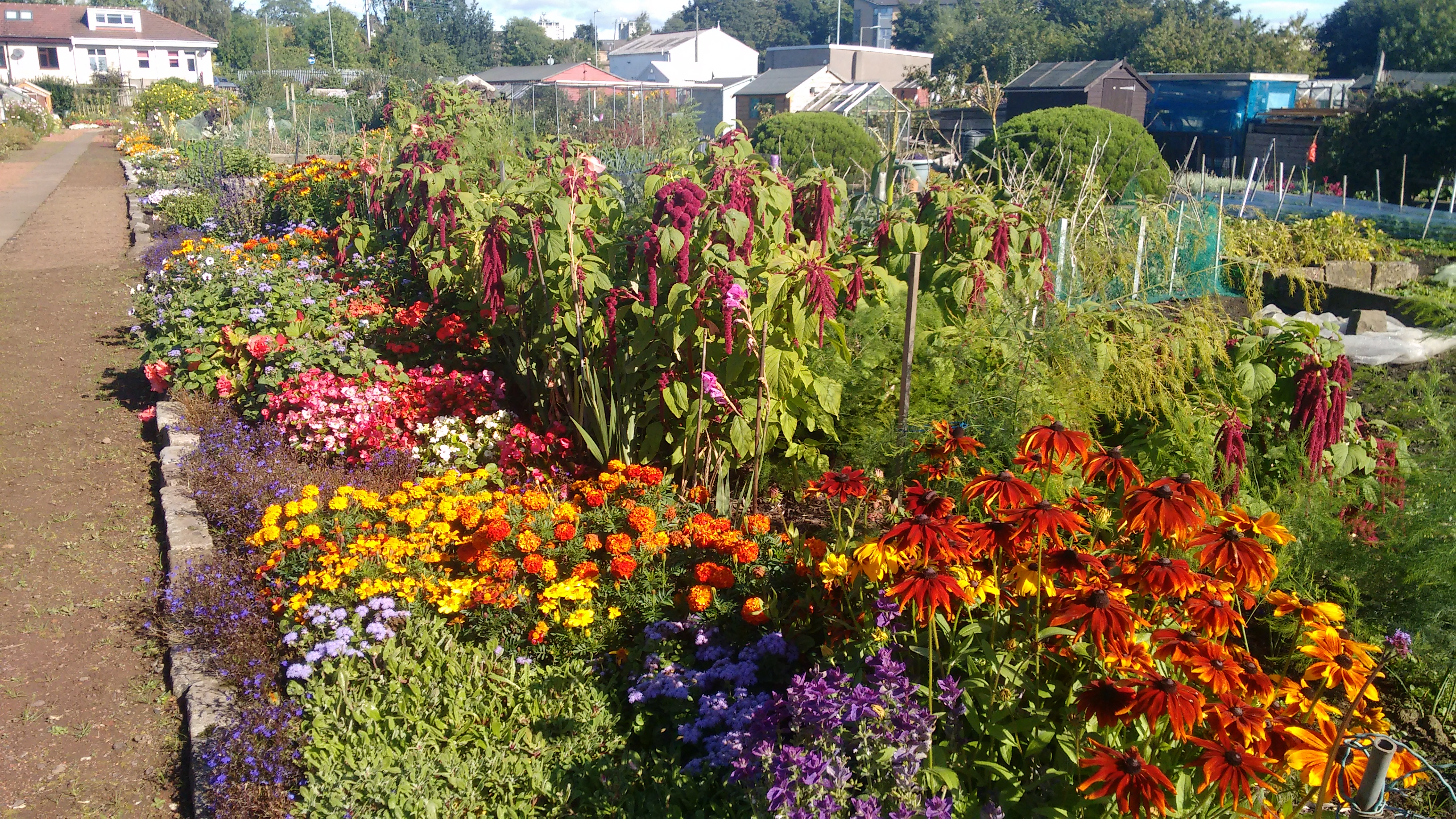 Berridale Allotments and Gardens