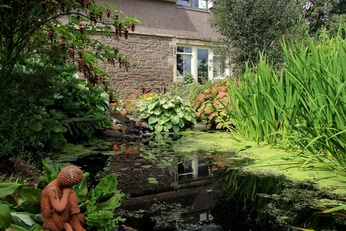 Old Farm Cottage: Pond and House