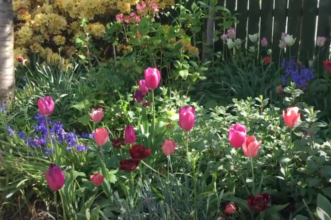 Hunter's Tryst Virtual Garden Tour in May