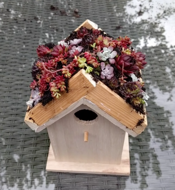 Make a Living Roof for your Birds and a Crown Children's Activity