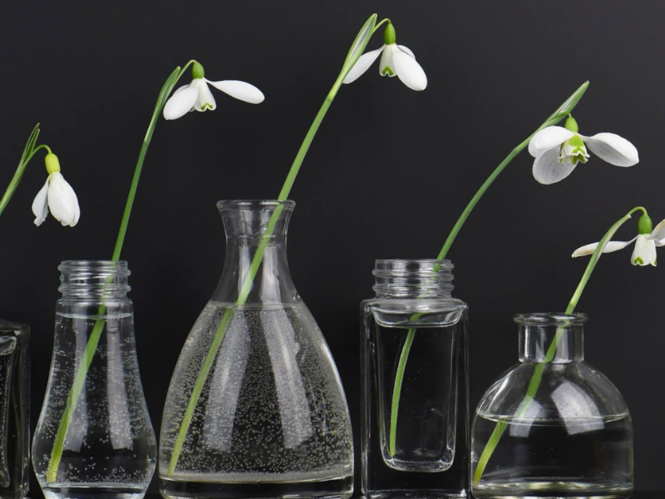 Growing snowdrops in Scotland - video