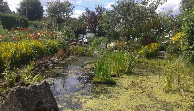 Salt Pond Gardens Portmore Garden Ftempo