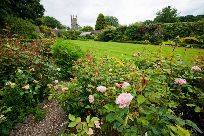 Roses with a view at Woodfall gardens!