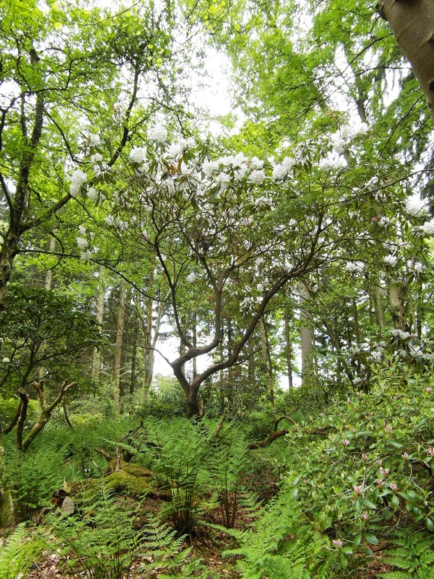 Woodland at Gargunnock House Garden